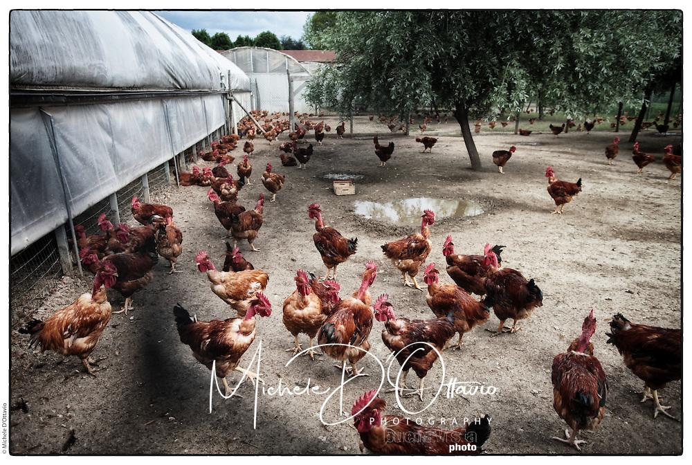 Il nostro allevamento di polli